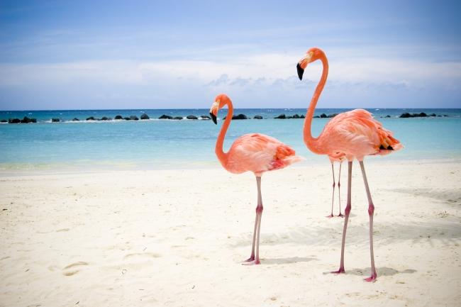Aruba - Cupos OK