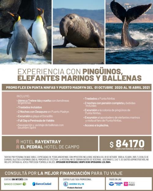 Experiencia con pingüinos, elefantes marinos y ballenas