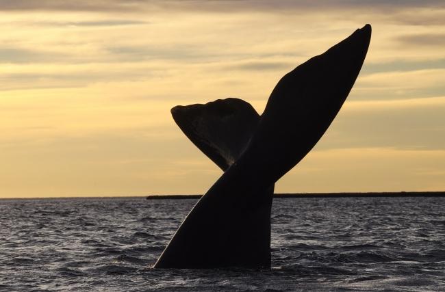 Puerto Madryn Vacaciones de Invierno 2021