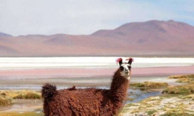 La Paz , Salar de Uyuni, Lagunas de Colores e Isla del Sol