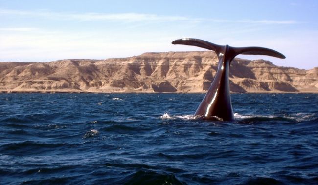 Ballenas / Puerto Madryn Bus Vacaciones de Invierno